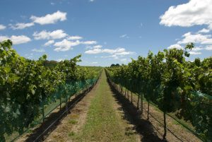 Southern Highlands Tour